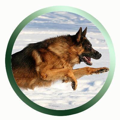 Aktív kutyáknak való kutyatáp