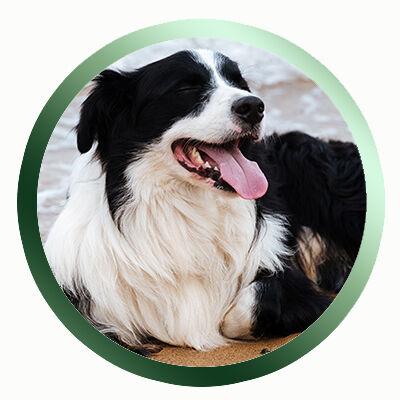 Felnőtt kutyának való kutyatáp
