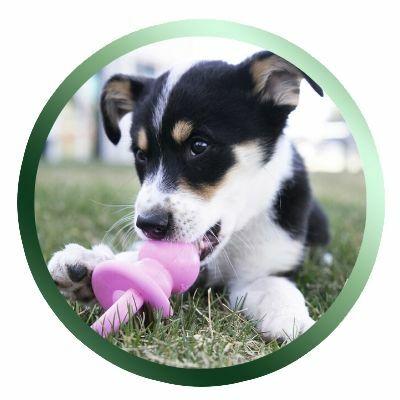 kölyök kutyáknak való kutyatáp