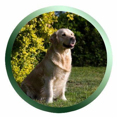 Vemhes kutyának való kutyatáp