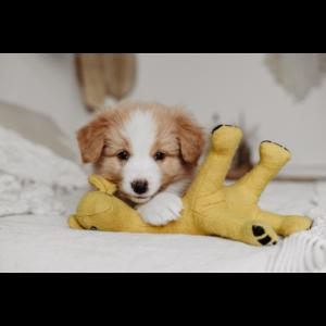 Kép 3/4 - Hunter Eiby Zsiráf Plüssállat kutyáknak - 18 cm