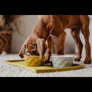 Kép 6/7 - Hunter Eiby kerámia kutyatál sárga - 1100 ml