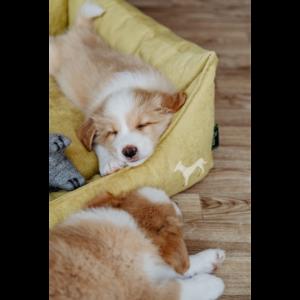 Kép 5/6 - Hunter Eiby kutyakanapé sárga - S