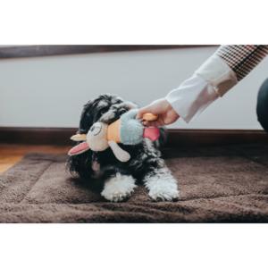 Kép 2/2 - Hunter Muli Nyuszi Plüssállat kutyáknak
