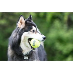 Kép 2/5 - KONG AirDog Squeakair Ball Kutyajáték - S (3db)