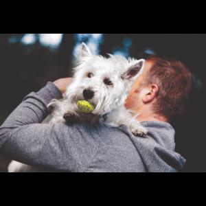 Kép 6/6 - KONG AirDog Squeakair Ball Kutyajáték - S (3db)