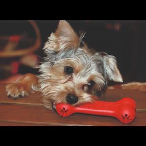 Kép 4/4 - KONG Classic Goodie Bone Kutyajáték - L
