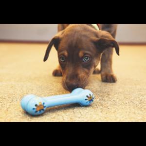 Kép 3/4 - KONG Puppy Goodie Bone Kutyajáték - rózsaszín