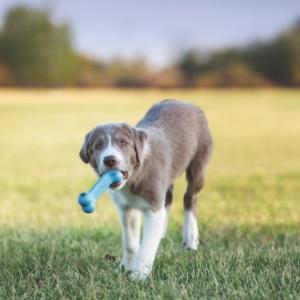 Kép 2/4 - KONG Puppy Goodie Bone Kutyajáték - rózsaszín